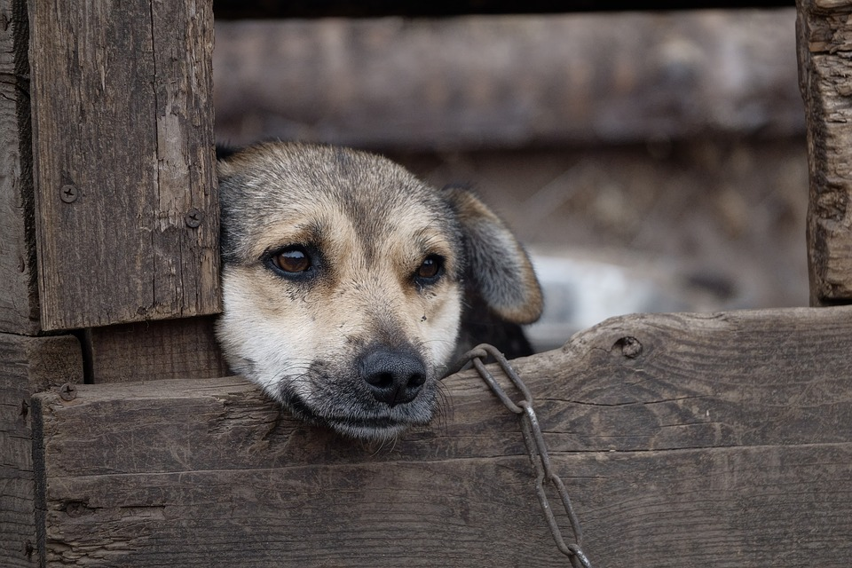 Le chenil pour chien